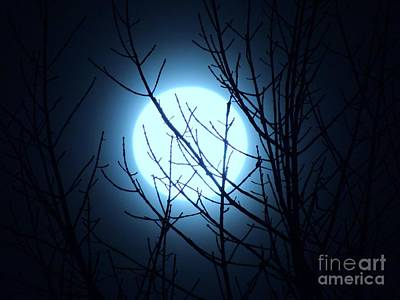 Photograph - Super Moon 2016 by Lisa Gilliam