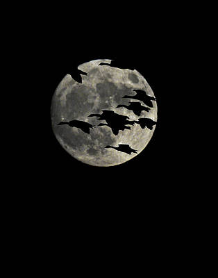 Photograph - Super Moon Geese Transit by William Jobes