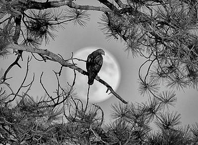 Photograph - Super Moon Hawk by Kevin Munro