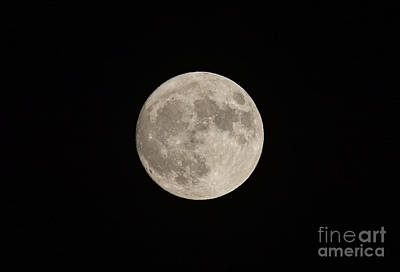 Photograph - Super Moon by Les Palenik