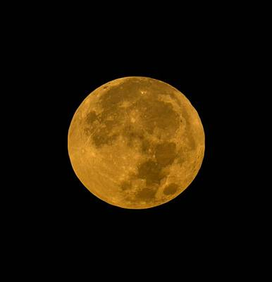 Photograph - Super Moon Monday by Maria Reverberi