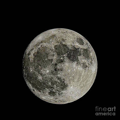 Photograph - Super Moon by Peggy Franz