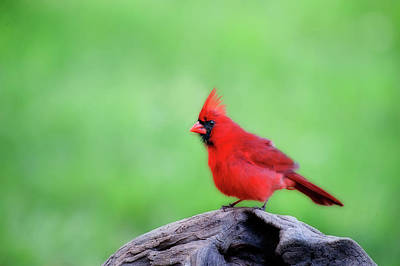 Photograph - Super Red by Dan Friend