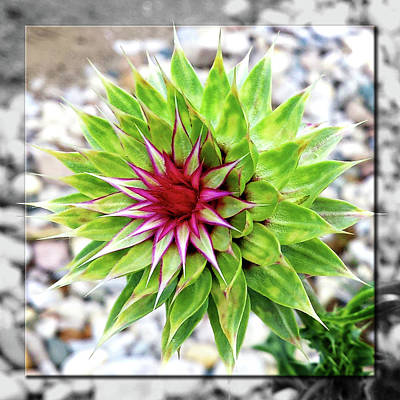 Photograph - Super Summer Weed by Robert Clayton