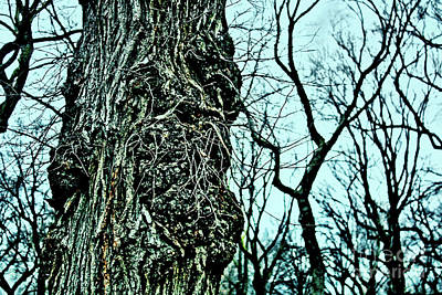 Art Print featuring the photograph Super Tree by Sandy Moulder