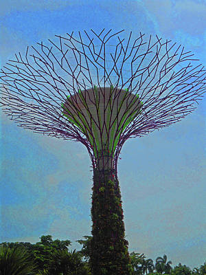 Photograph - Super Trees 29 by Ron Kandt