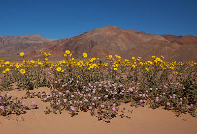 Photograph - Superbloom At Death Valley by Susan Rovira