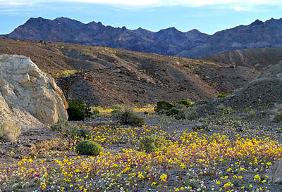 Photograph - Superbloom Funeral Mountains Death Valley by Ed  Riche