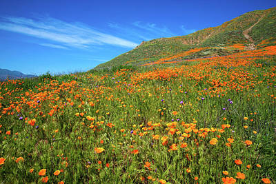 Photograph - Superbloom Hillside In Walker Canyon by Lynn Bauer