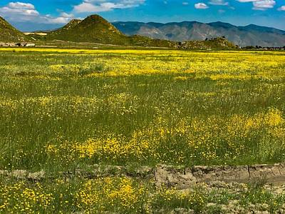 Photograph - Superbloom In Hemet Ca by Chris Tarpening