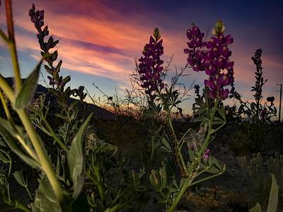 Photograph - Superbloom In The Desert by Chris Tarpening