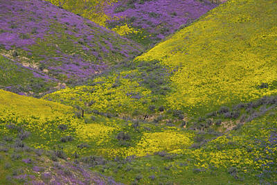 Photograph - Superbloom On The Carrizo 2017  by Lynn Bauer