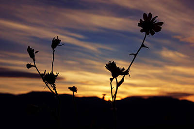 Photograph - Superbloom Sunset In Death Valley 100 by Daniel Woodrum