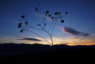 Photograph - Superbloom Sunset In Death Valley 101 by Daniel Woodrum