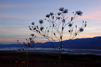 Photograph - Superbloom Sunset In Death Valley 102 by Daniel Woodrum