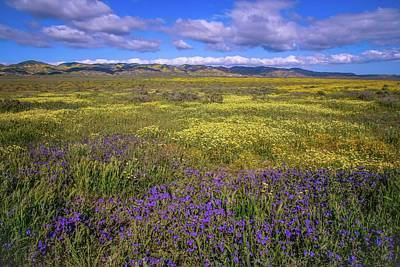 Photograph - Superbloom Wildflowers Of The Carrizo Plain by Lynn Bauer