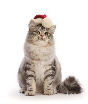 Photograph - Supercilious Santa Cat by Warren Photographic