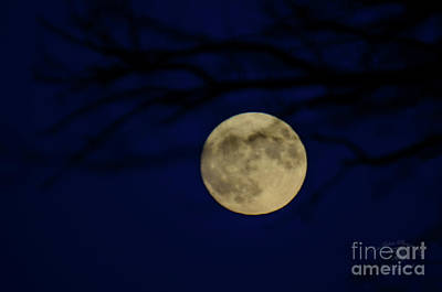 Photograph - Supermoon at Blue Hour by FotoSchut Photography