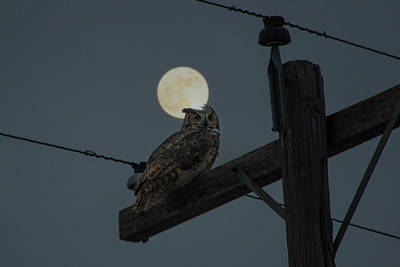Photograph - Supermoon Owl  by Aaron J Groen