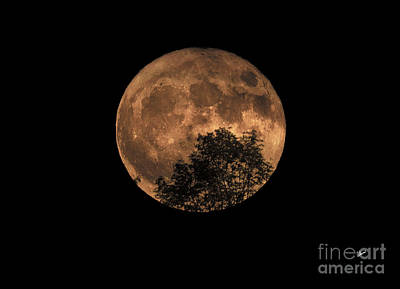 Photograph - Supermoon Rising by Alana Ranney