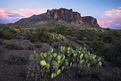 Photograph - Superstitions Prickly Pear by Dave Dilli