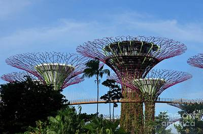 Photograph - Supertrees And Ocbc Skyway At Gardens By The Bay Singapore by Imran Ahmed