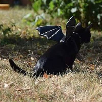 Steampunk Photograph - Supposedly The #jerseydevil Was Spotted by Sirius Black Adventure Cat