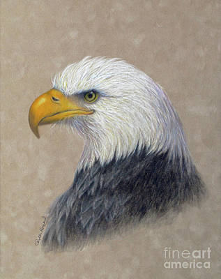 Soaring Drawing - Supremacy by Phyllis Howard