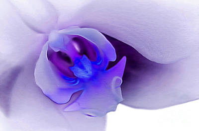 Abstract Digital Art Photograph - Supreme Orchid by Krissy Katsimbras