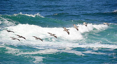 Photograph - Surf And Pelicans by AJ Schibig