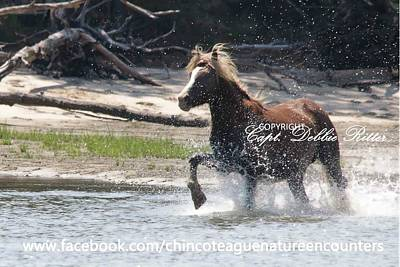 Photograph - Surf And Turf by Captain Debbie Ritter