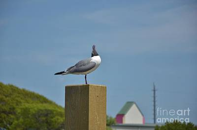 Photograph - Surf City Nc Sea Birds - 1 by Bob Sample
