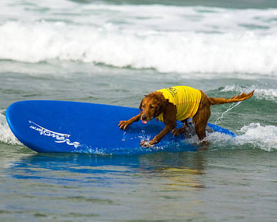 Photograph - Surf Dog - Riding The Rail by Waterdancer