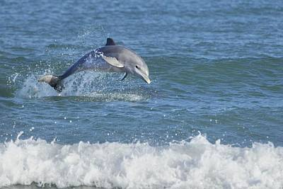 Photograph - Surf Dolphin by Bradford Martin