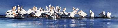 Photograph - Surf Play White Pelicans by Sheri McLeroy