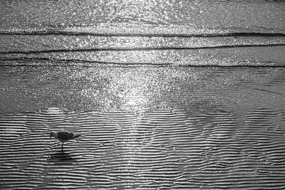 Photograph - Surf Sand Seagull by Jordan Blackstone