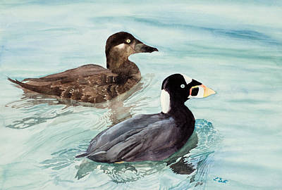 Painting - Surf Scoter Ducks by Laurel Best