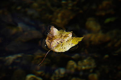 Photograph - Surface Tension - Leaf On Water by Kirkodd Photography Of New England