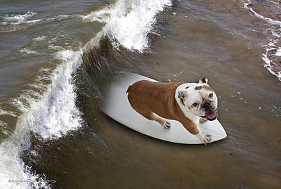 Photograph - Surfer Dog by John A Rodriguez