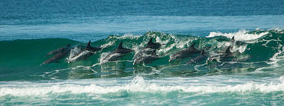 Surfing Dolphins 4 Art Print