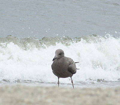 Photograph - Surf''s  Up  Gull At The Shore by Margie Avellino