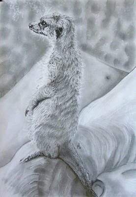 Meerkat Drawing - Suricata by Maria Woithofer