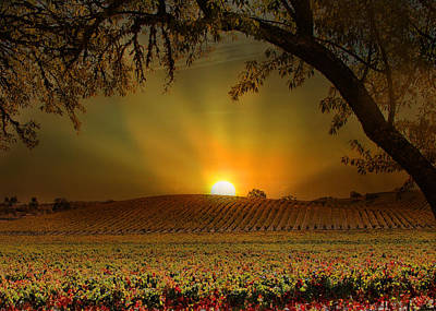 Wine Lovers Photograph - Surise Vineyard by Stephanie Laird