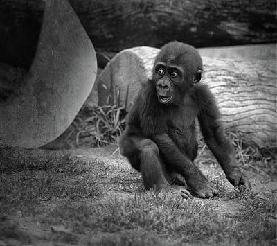 Monkey Photograph - Surprise by Larry Marshall