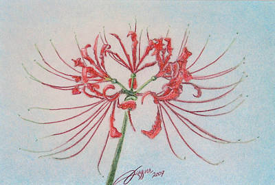 Fuqua - Artwork Drawing - Surprise Lily by Beverly Fuqua