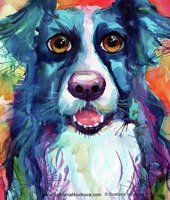 Portrait Photograph - Surprised Border Collie Watercolor by Svetlana Novikova