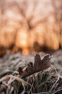 Photograph - Surprises In Nature by Annette Berglund