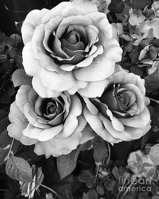 Haunting Photograph - Surreal Black And White Roses - Haunting Surreal Romantic Black And White Roses Floral Photography by Kathy Fornal