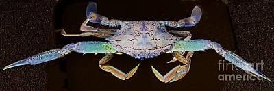 Surrealism Royalty-Free and Rights-Managed Images - Surreal Crab. Exclusive Original stock Surreal and Abstract  Photo Art digital download. by Geoff Childs