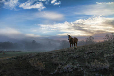 Horse Photograph - Surreal Horse And Sky by Stephanie Laird